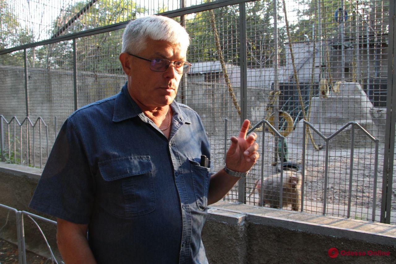 Как ловили павианов: директор одесского зоопарка прокомментировал произошедшее ЧП