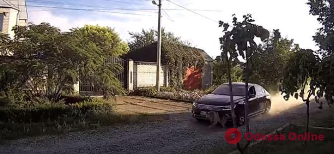 Переехавший на автомобиле овчарку живодер оказался сыном экс-депутата Одесского облсовета