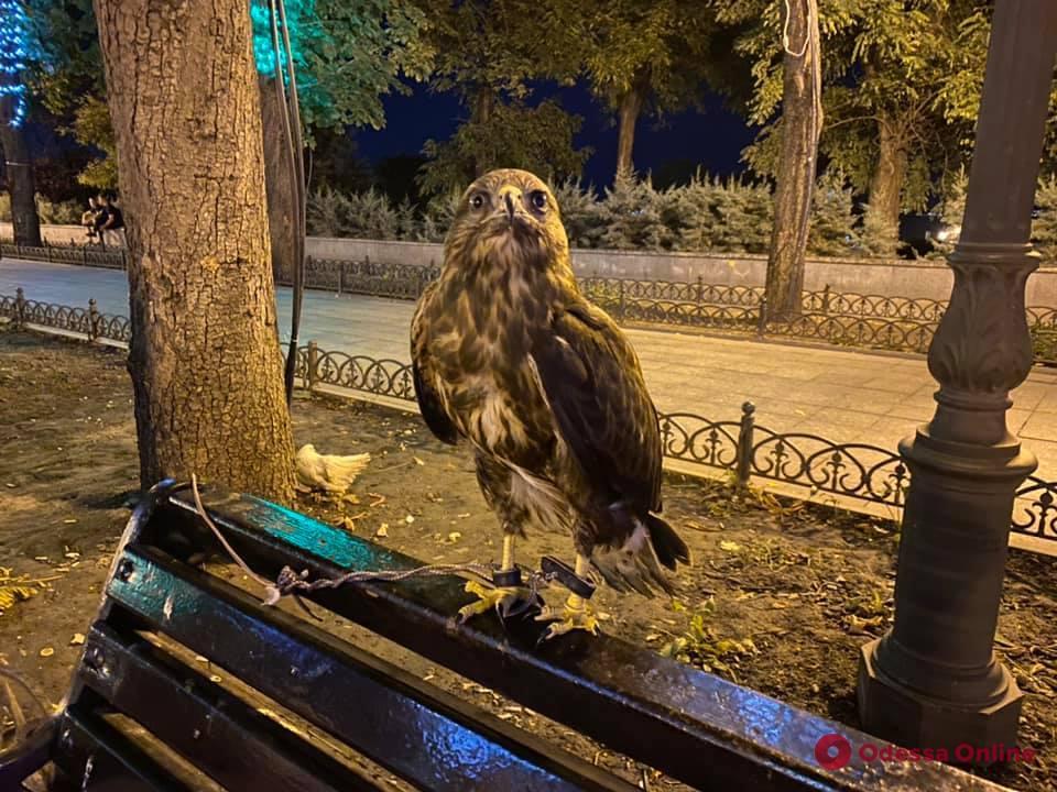 В Одессе активисты с полицией отобрали у уличного фотографа хищную птицу