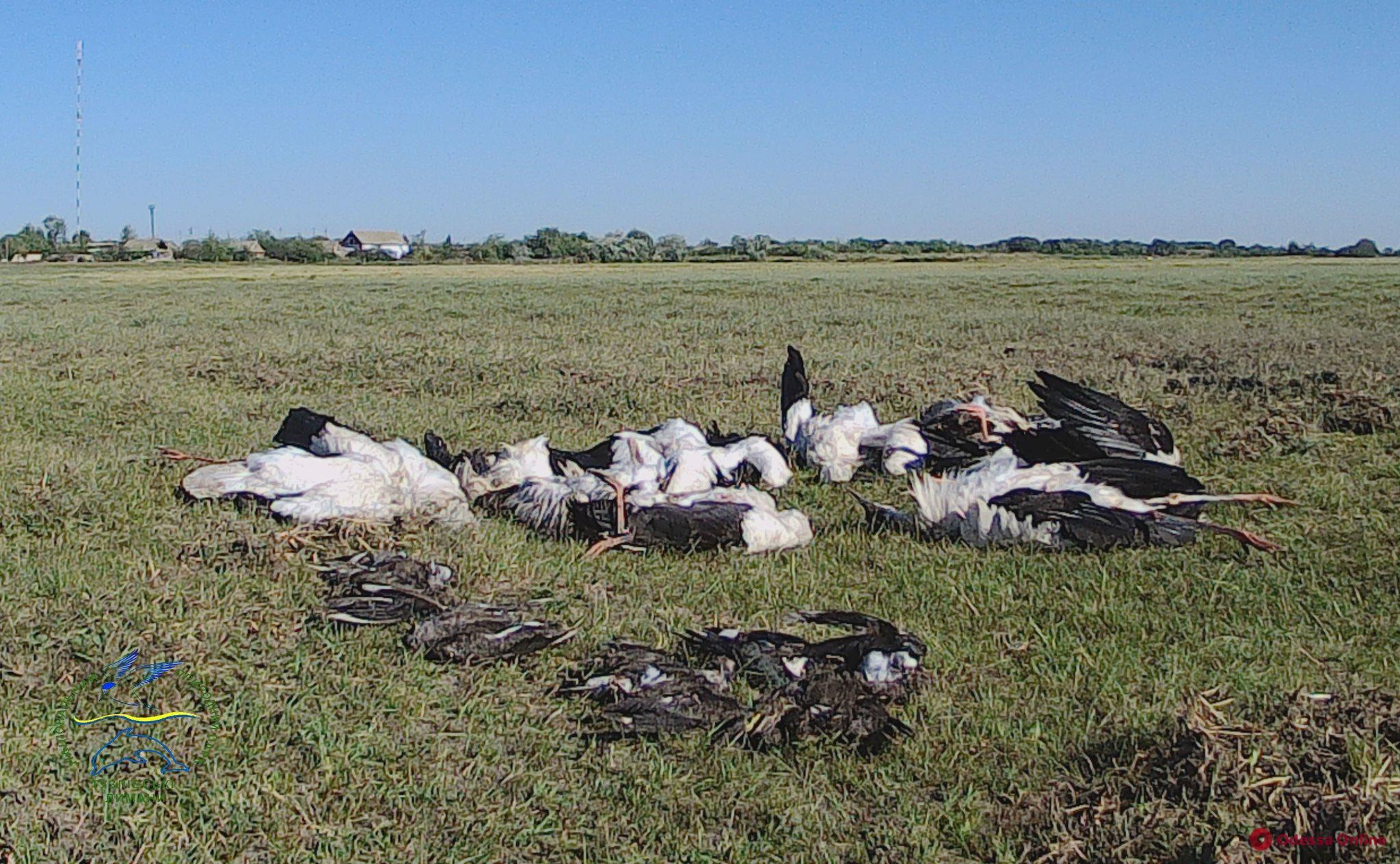 В Одеской области град убил сотни редких птиц