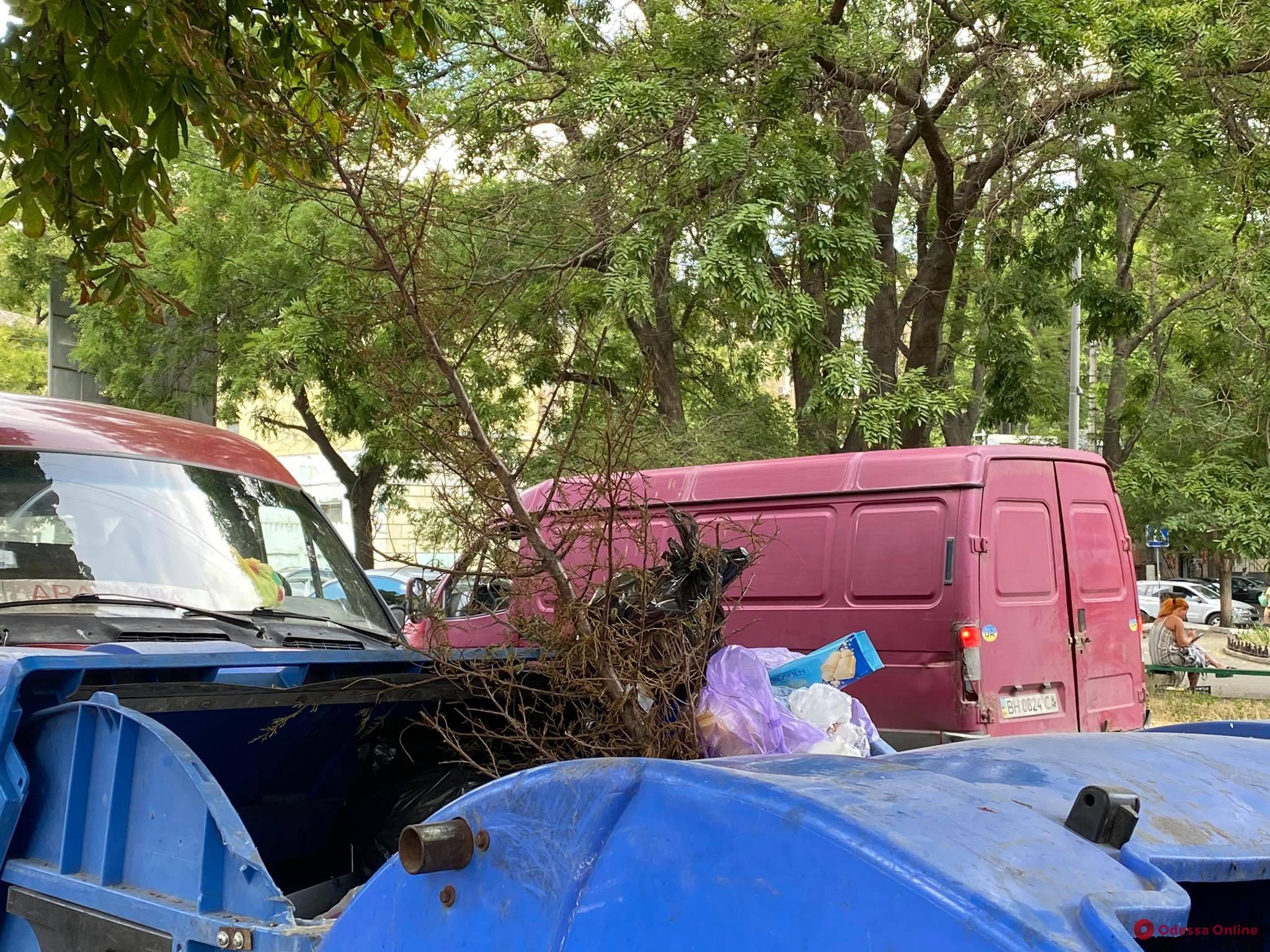 Не выдержал: одессит выбросил елку в августе (фотофакт)
