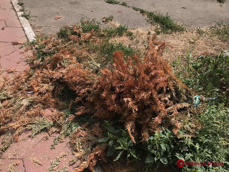 Сдался: кто-то из одесситов выбросил остатки новогодней елки (фотофакт)