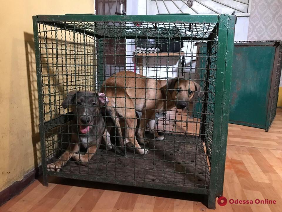 В Одессе зооволонтеры с дракой спасли 9 собак от горе-хозяев (фото и видео)