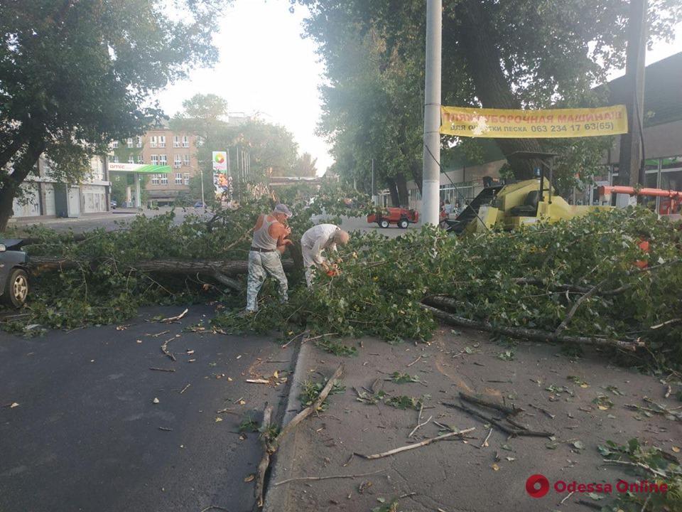 На Атамана Головатого дерево рухнуло на дорогу (фото и видео)