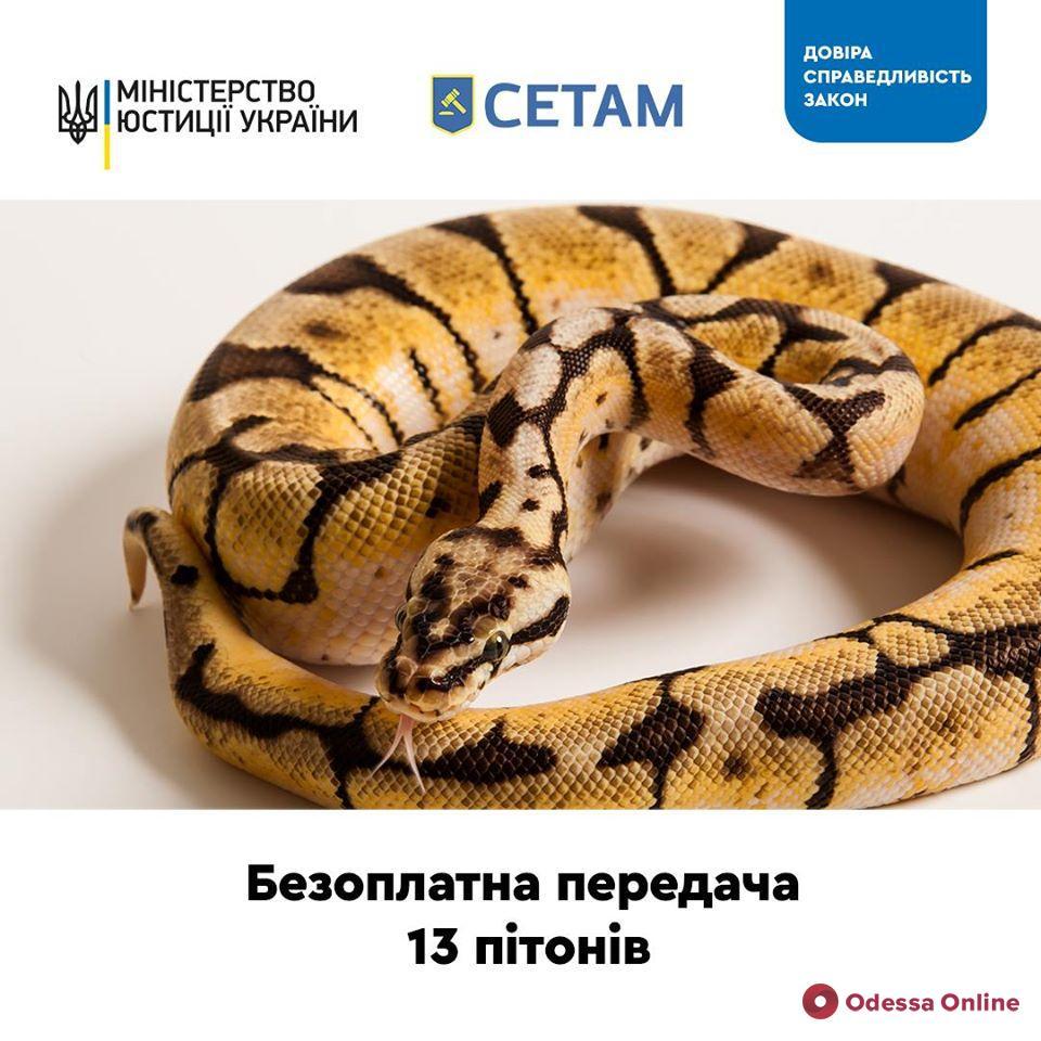 Минюст предлагает украинским зоопаркам бесплатно приютить 13 питонов