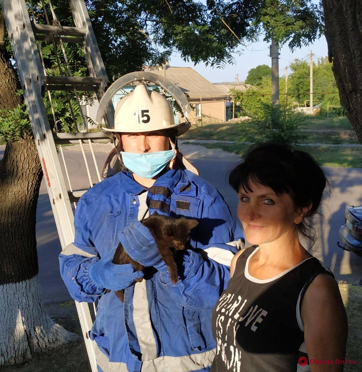 В Одесской области пожарные спасли кота