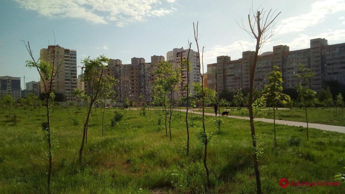 В Одессе на поселке Котовского появится новый парк