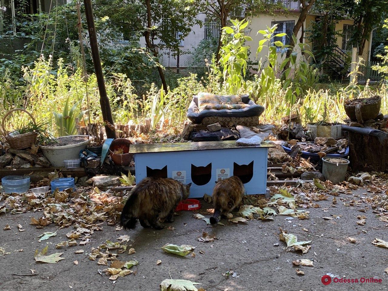 В одесских дворах появились еще три домика для кошек