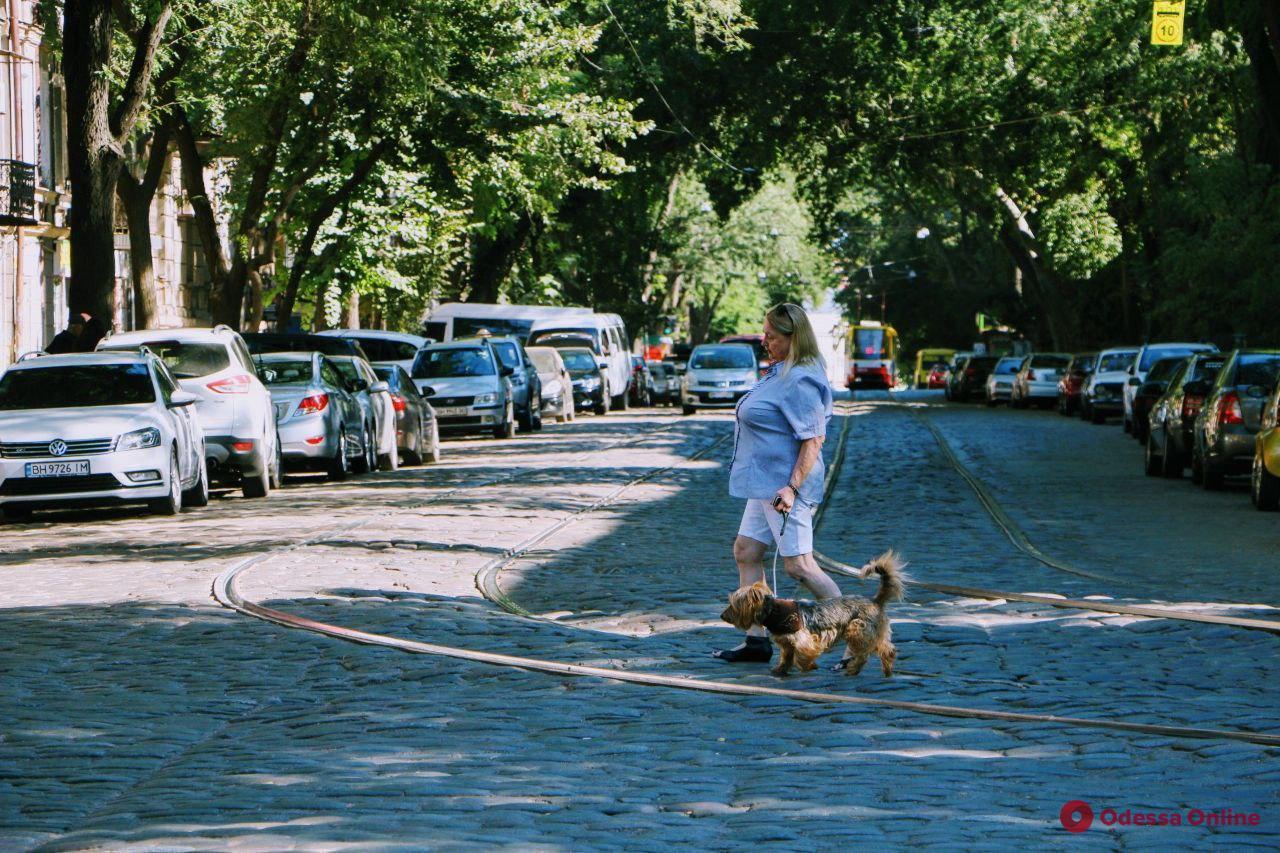 Тихая, зеленая и нарядная: прогулка по улице Дворянской (фоторепортаж)