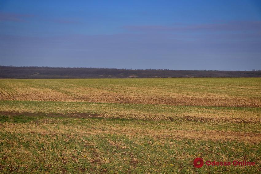 В Одесской области учебному заведению вернули 100 гектаров земли