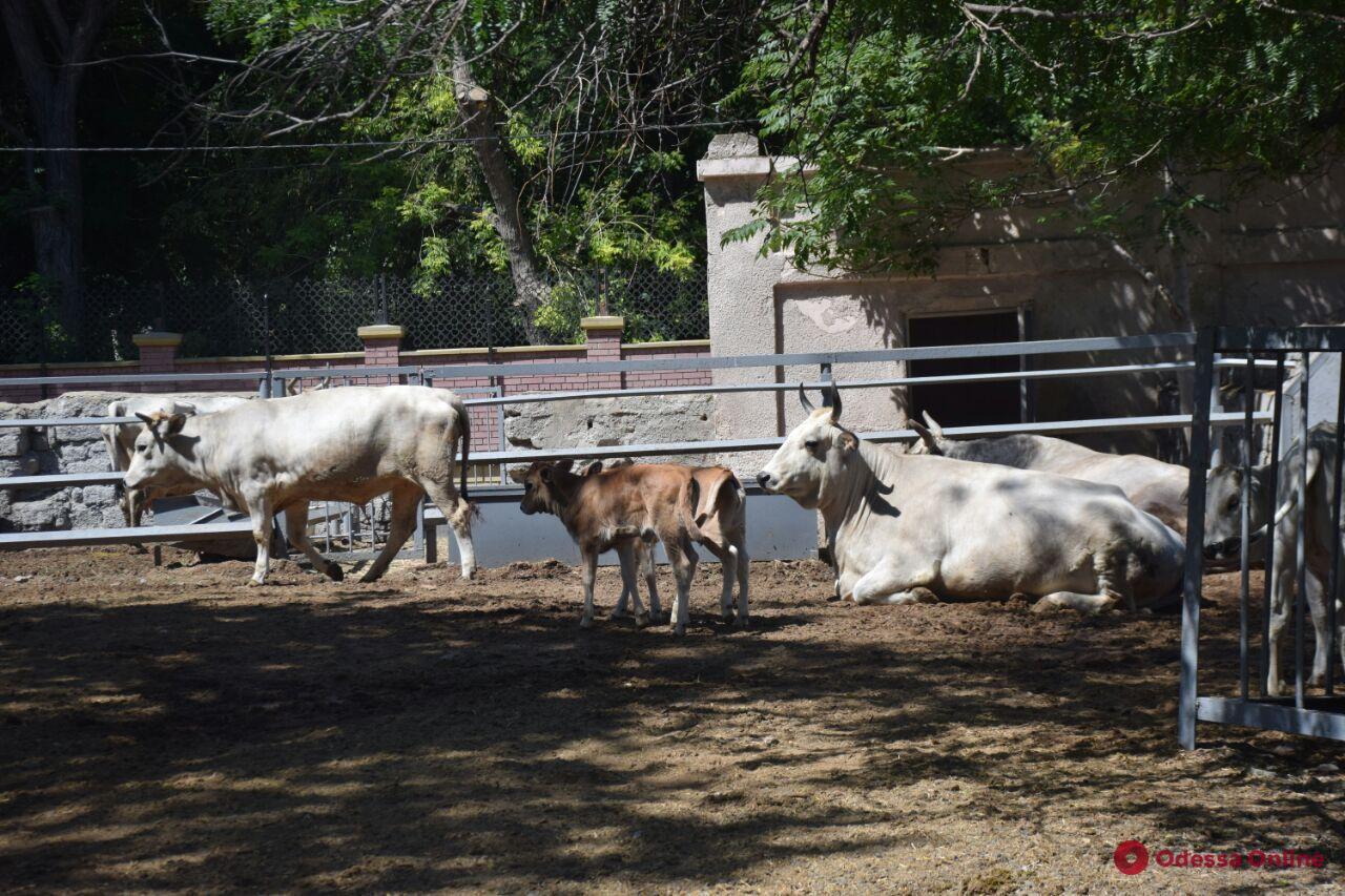 В Одесском зоопарке прошел праздник «Украинский дворик» (фото)