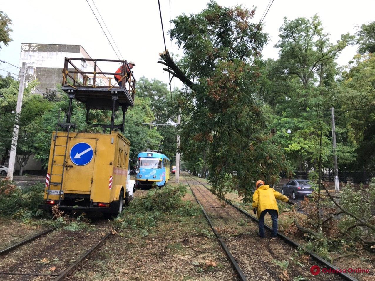 Из-за упавших деревьев не ходят пять троллейбусов и трамвай