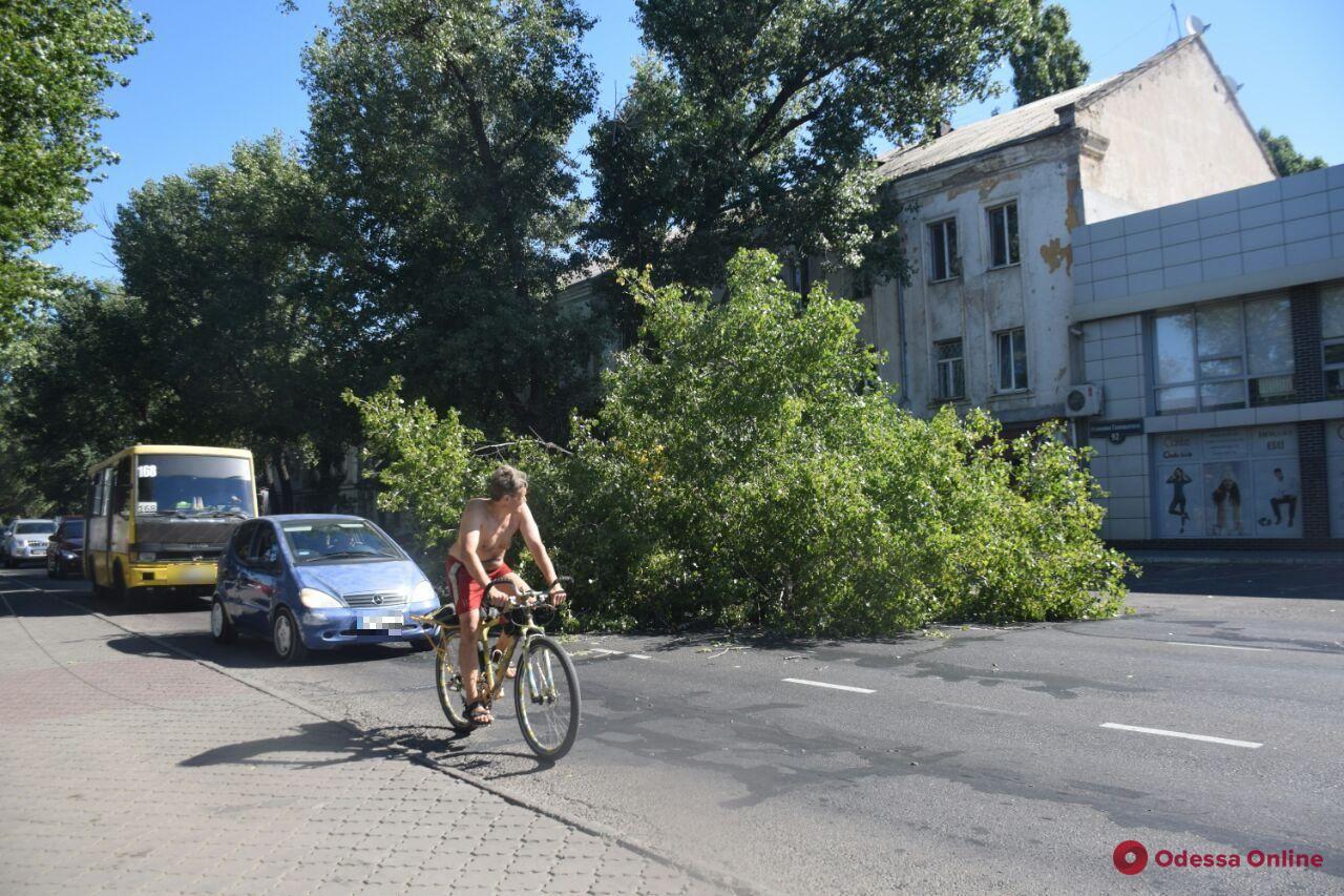 На Атамана Головатого из-за упавшего дерева образовалась пробка (фото)