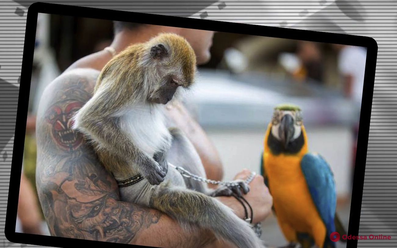 Одесский зоопарк выступил против эксплуатации животных ради уличных фотографий (видео)