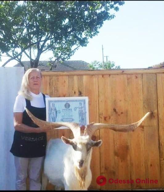 В Одесской области живет козел-рекордсмен