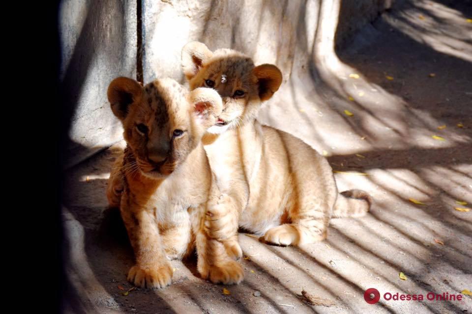 Одесситам предлагают дать имена маленьким питомцам зоопарка