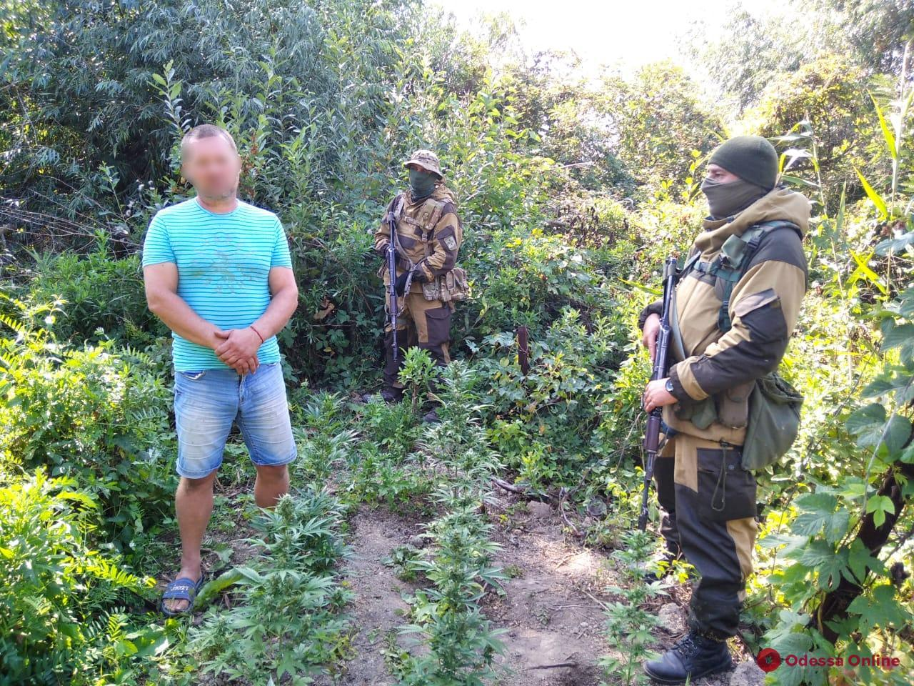 На дунайском острове пограничники обнаружили плантацию конопли