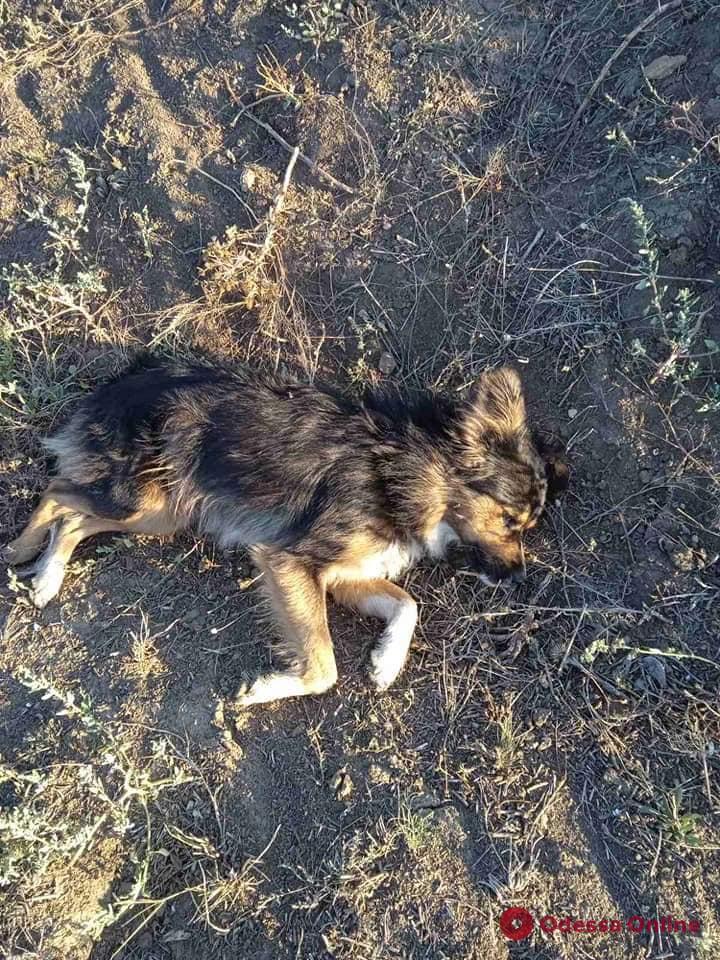 Под Одессой мужчина прямо на улице расстрелял из охотничьего ружья пятерых собак