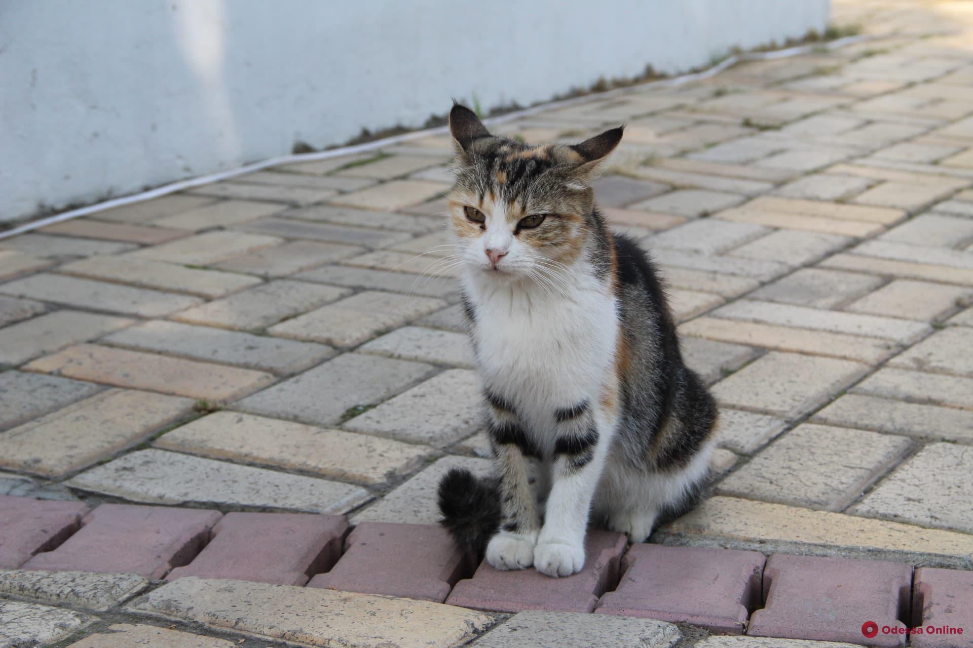 «Международный день объятий вашей кошки»: самые шикарные одесские усатые-полосатые (фотоподборка)