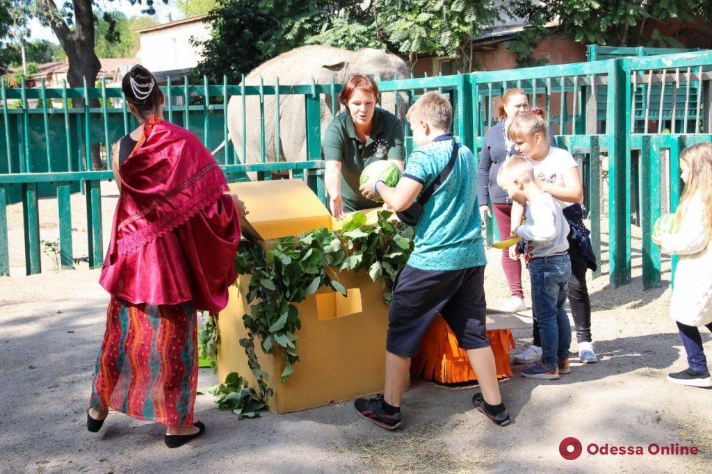 С Днем рождения: в Одесском зоопарке слониха Венди принимала поздравления и подарки
