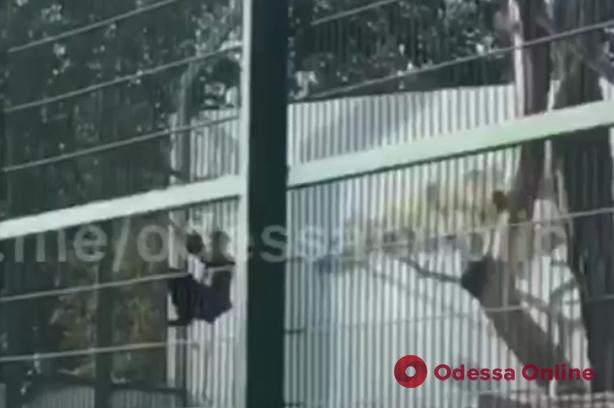 В одесском биопарке пьяный неадекват залез в вольер со львами (видео)