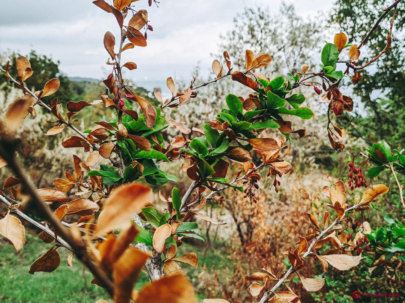 Погода в Одессе 21 октября: столбик термометра поднимется до +18