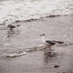 погода море пляж чайка  птица птицы