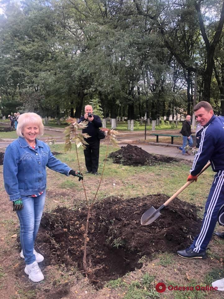Подарок одесситам: на Таирова и поселке Котовского учителя высадили кленовые аллеи (фото)