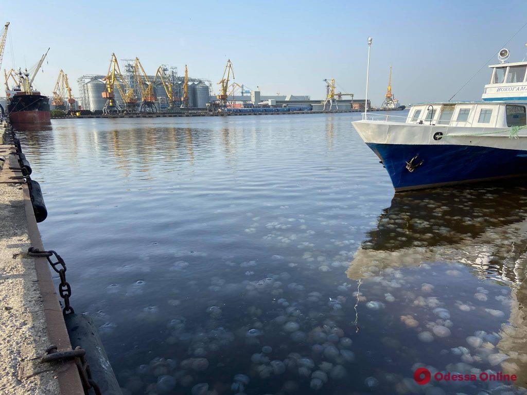 Одесский порт оккупировали корнероты (фотофакт)