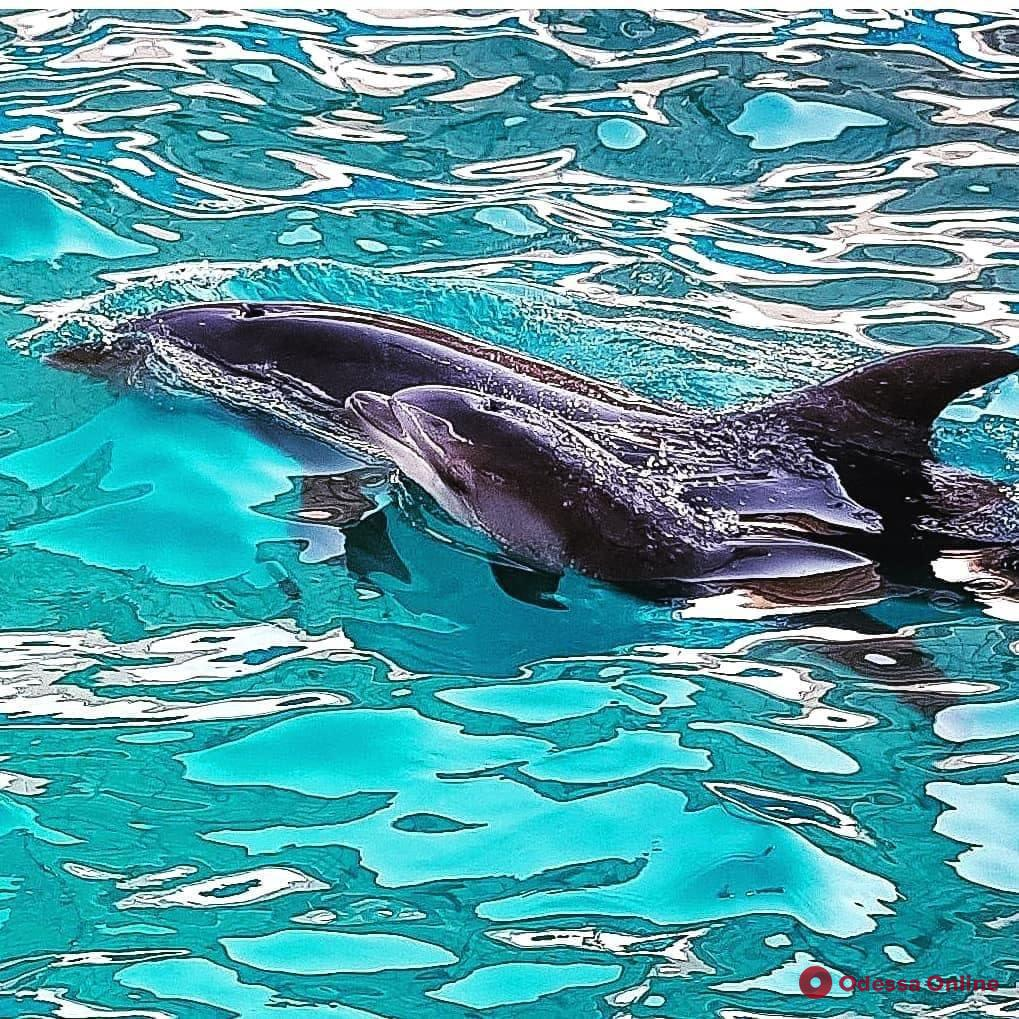 В одесском дельфинарии родился второй за месяц малыш