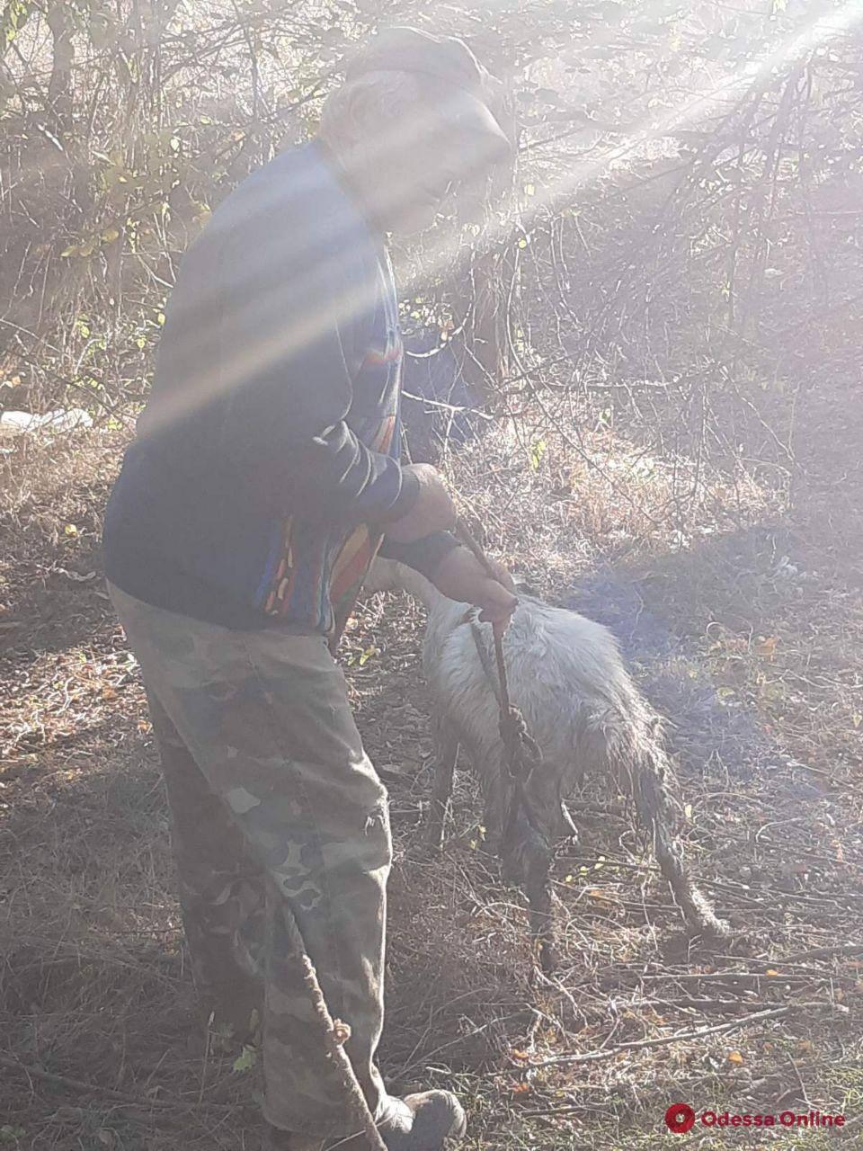 В Одесской области спасли упавшего в цистерну с мазутом козленка (фото)