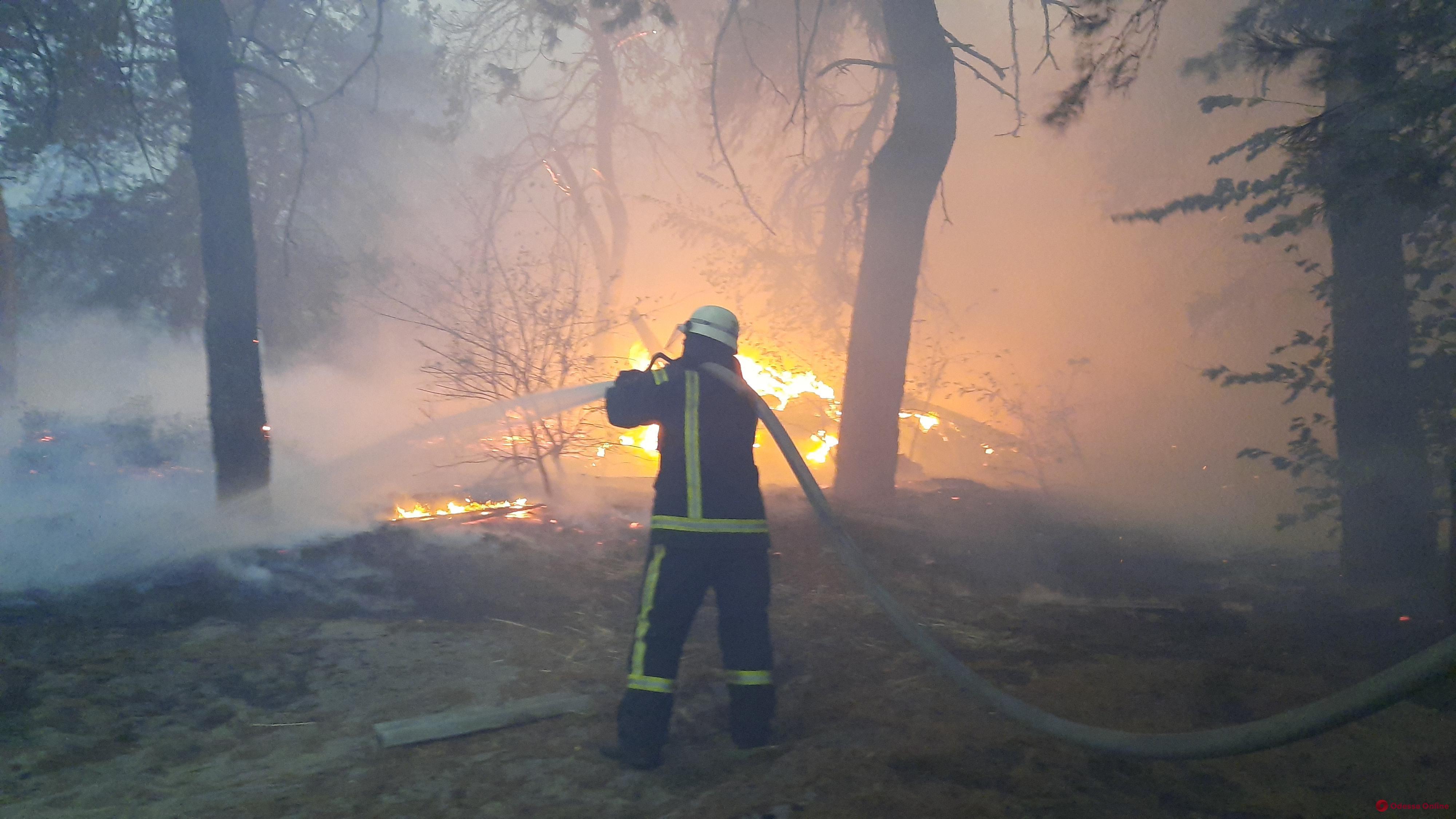 Во время лесных пожаров в Луганской области семеро человек погибли и четверо пропали без вести