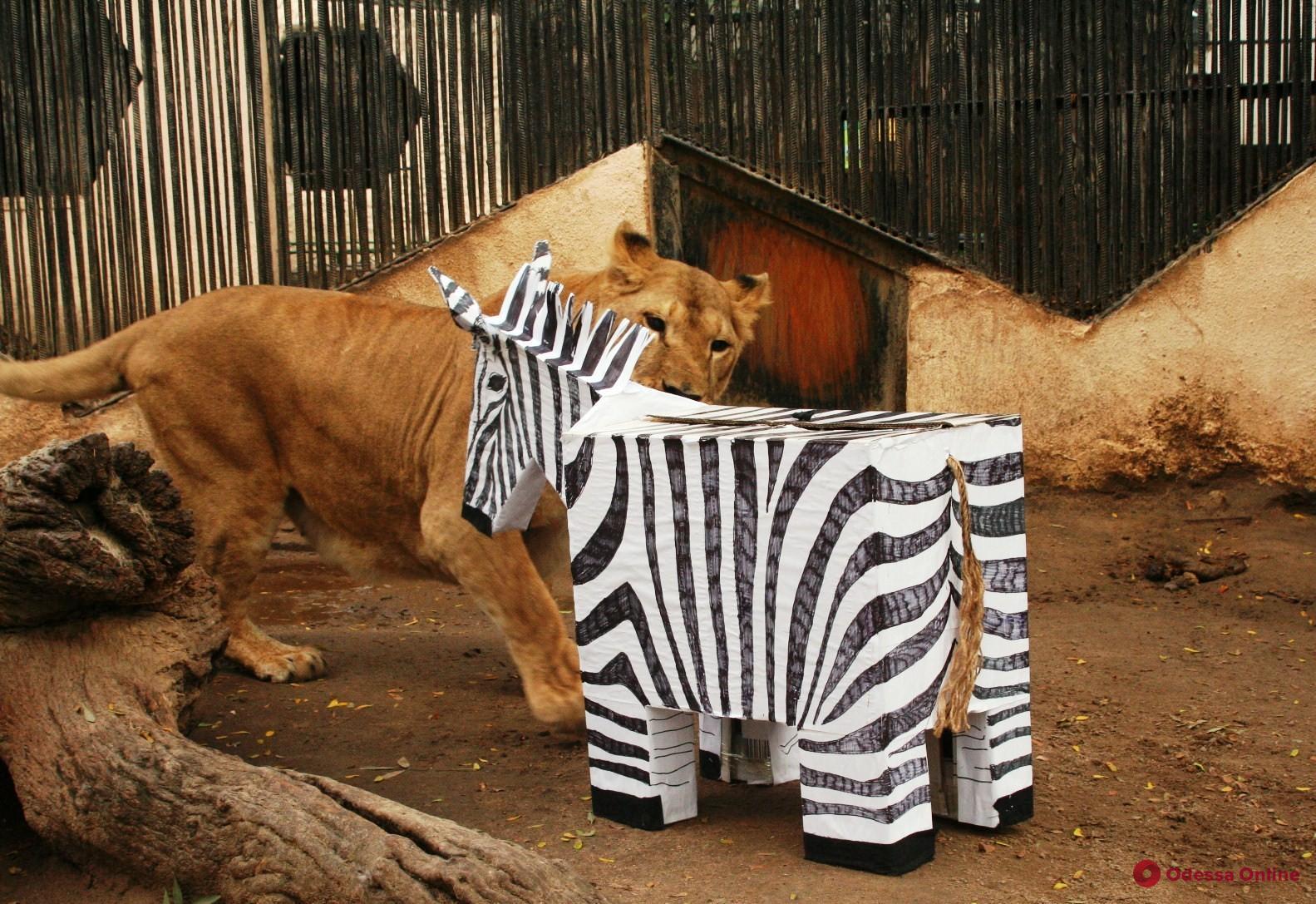Львята — Фред и Джордж, орленок — Одиссей: в одесском зоопарке дали имена родившимся в течение года детенышам