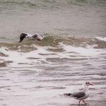 погода море пляж чайка чайки