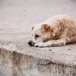 собака собаки море