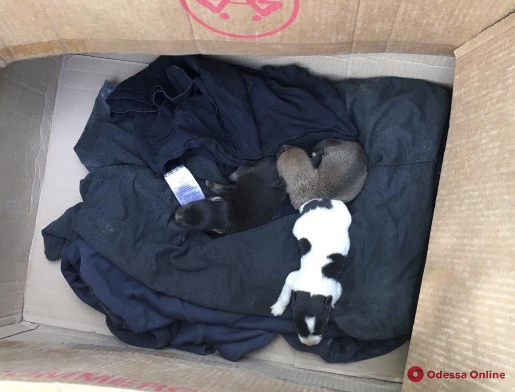 Под Одессой cпасатели вытащили из выгребной ямы собаку с новорожденными щенками