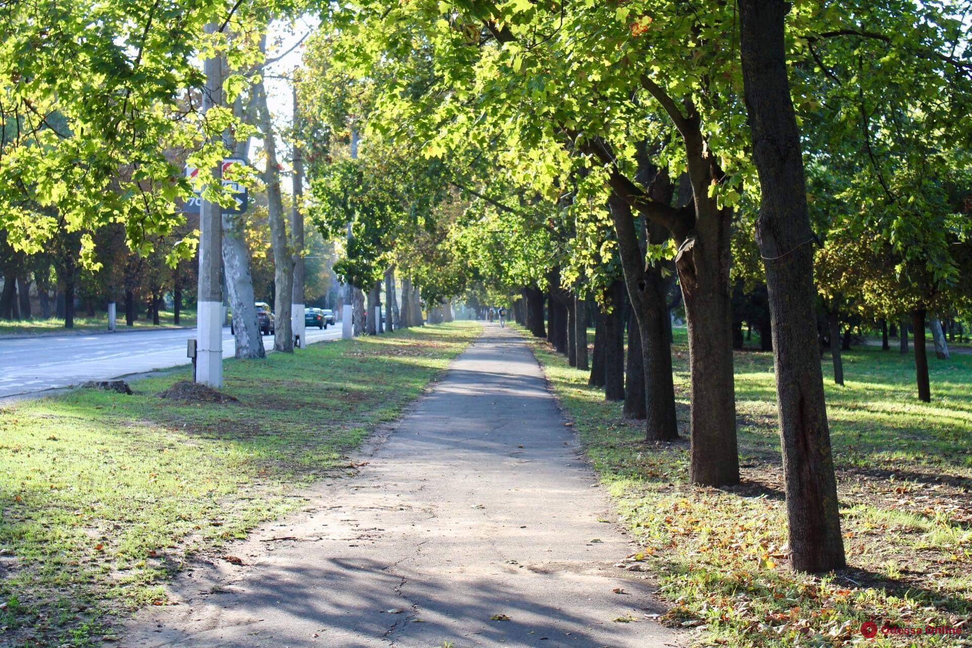 Синоптики рассказали, какой будет погода в Одессе 15 октября