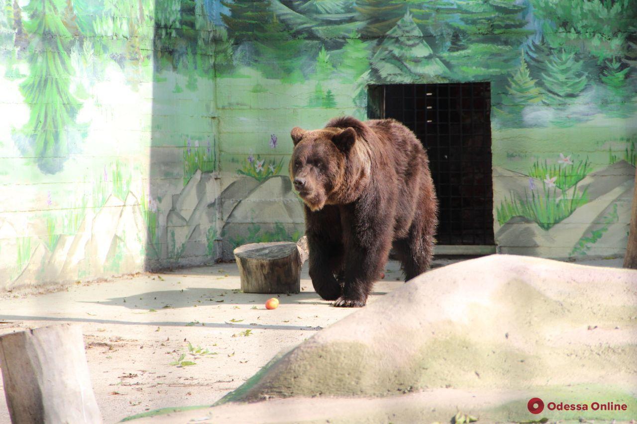 В Одесском зоопарке отпраздновали Всемирный день защиты животных (фото)