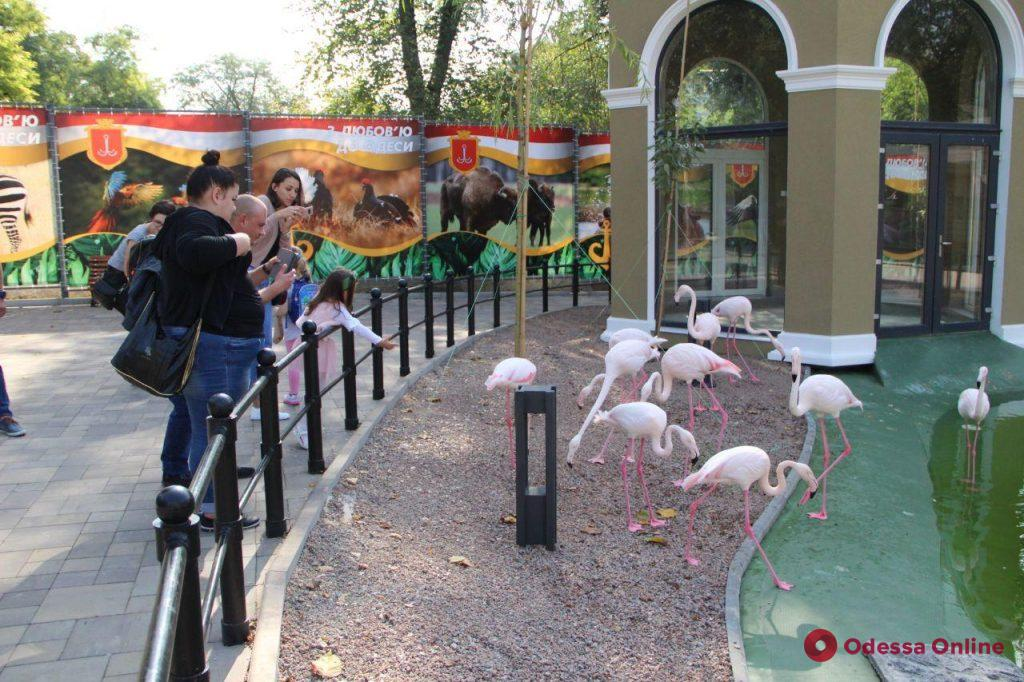 Десятое число десятого месяца года в Одессе: десять ярких фото дня