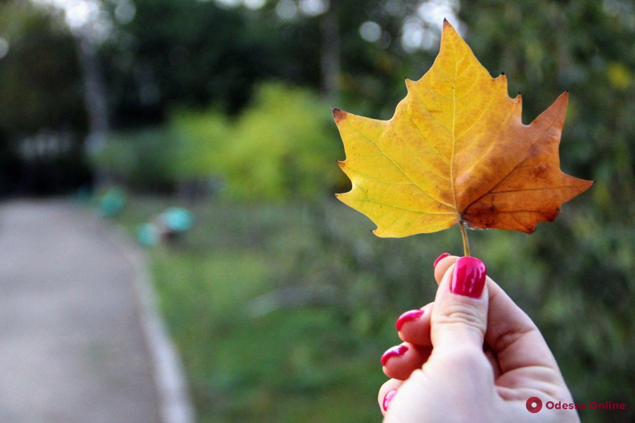 Погода в Одессе 23 октября: воздух прогреется до +21