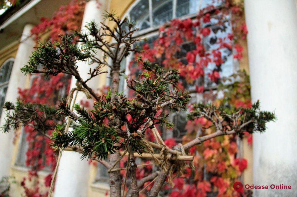 Осенняя палитра в ботсаду Одесского университета (фоторепортаж)