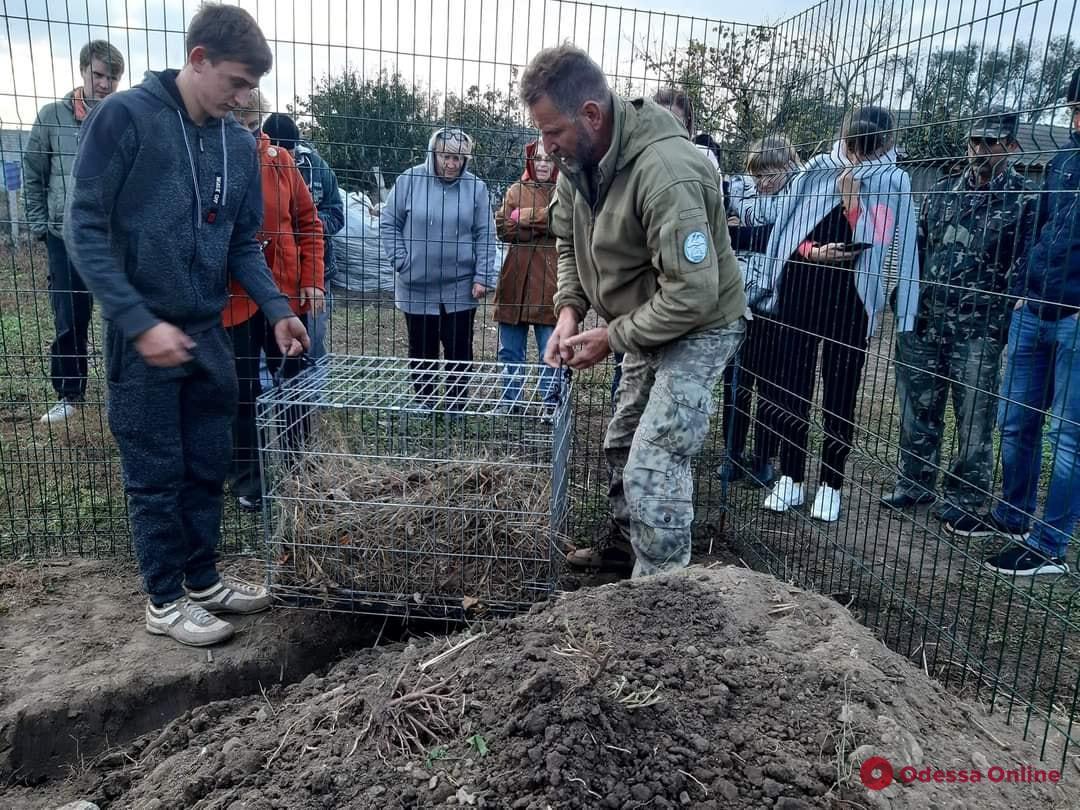 Перенесшая операцию барсучиха вернулась в Тузловские лиманы