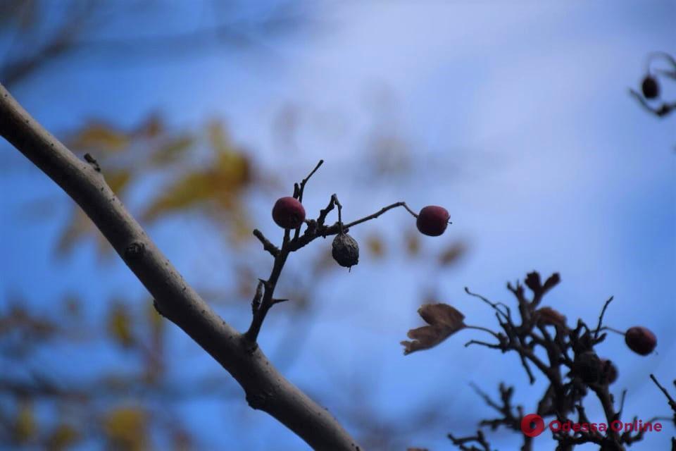 Погода 21 ноября: в Одессе ожидается 4-6°С