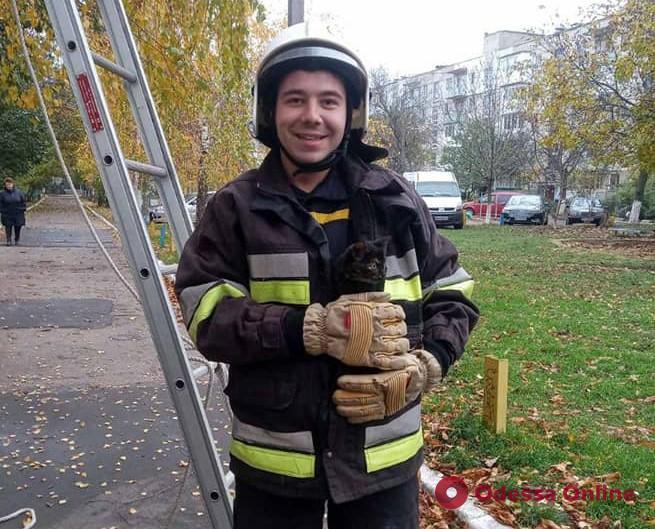 В Подольске спасатели сняли испуганного котенка с высокого дерева