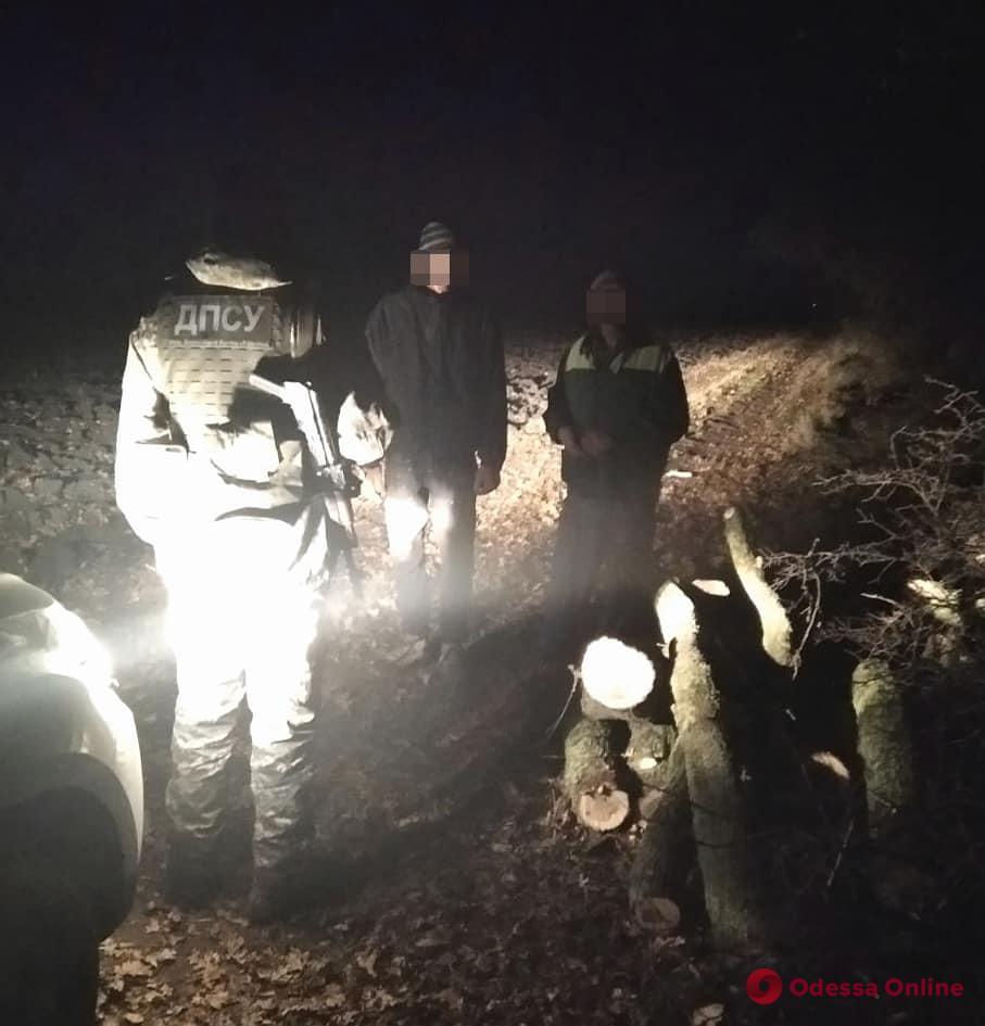 В Одесской области пограничники поймали уничтожавших краснокнижные деревья лесорубов