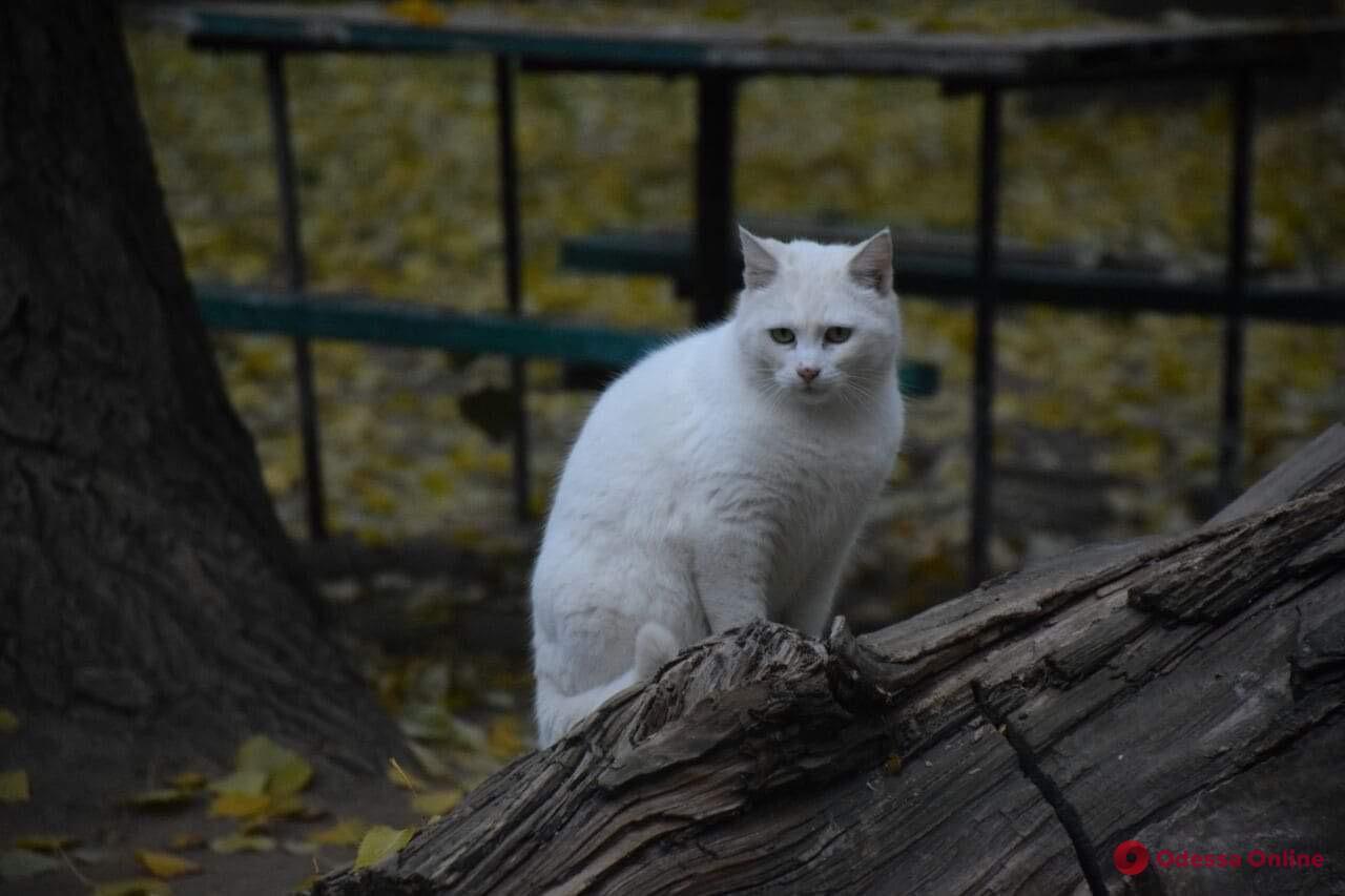 В Измаиле полицейские расследуют жестокие убийства бродячих котов