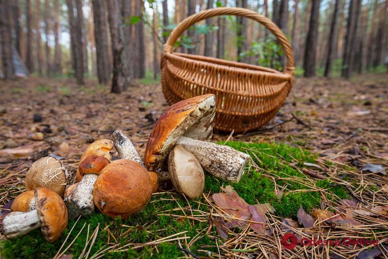 В Одесской области мать и 9-летняя дочь отравились грибами – девочка впала в кому