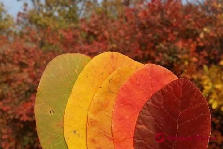 Погода в Одессе 7 ноября: столбик термометра поднимется до +14