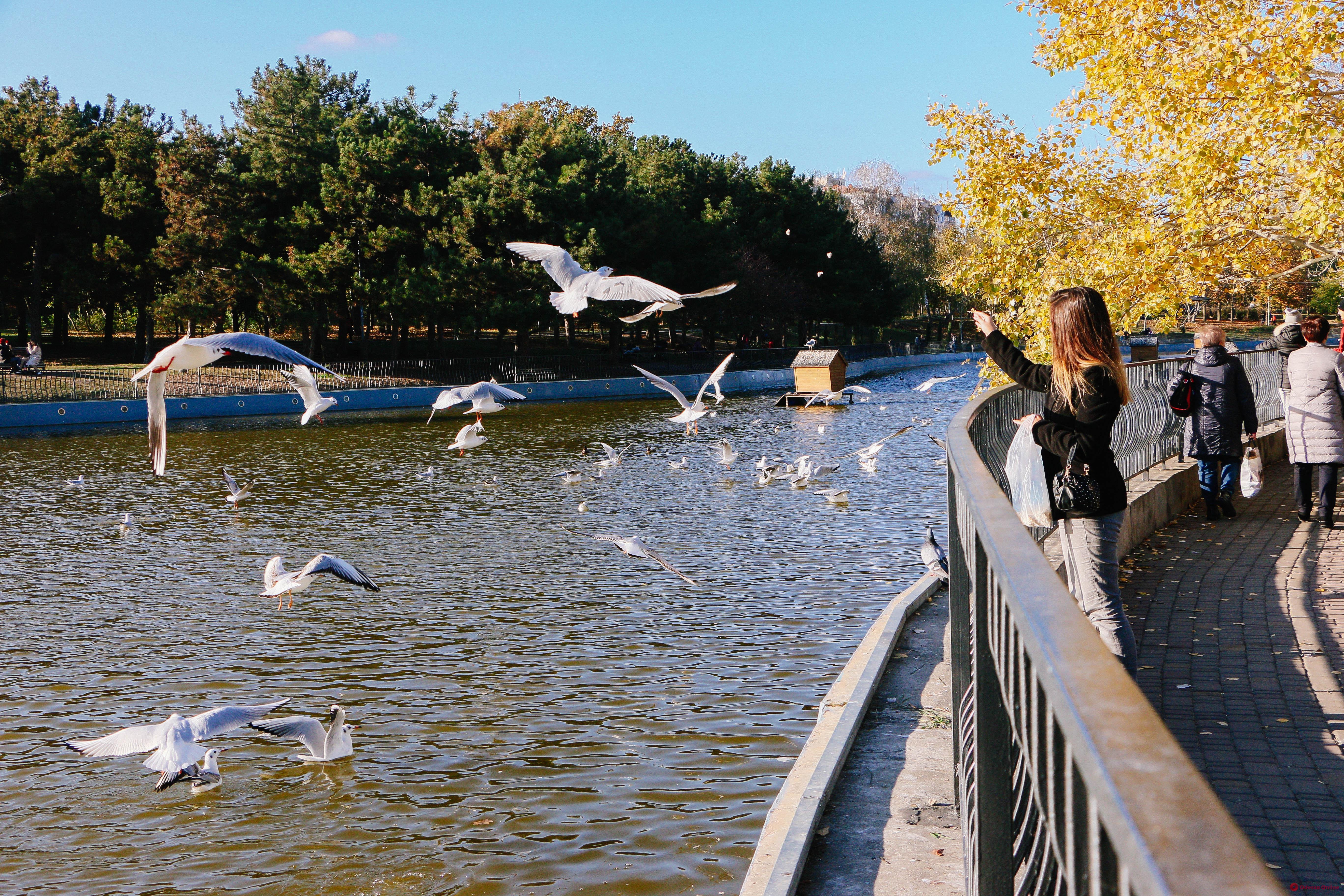 Последние дни золотой осени в парке Победы (фоторепортаж)