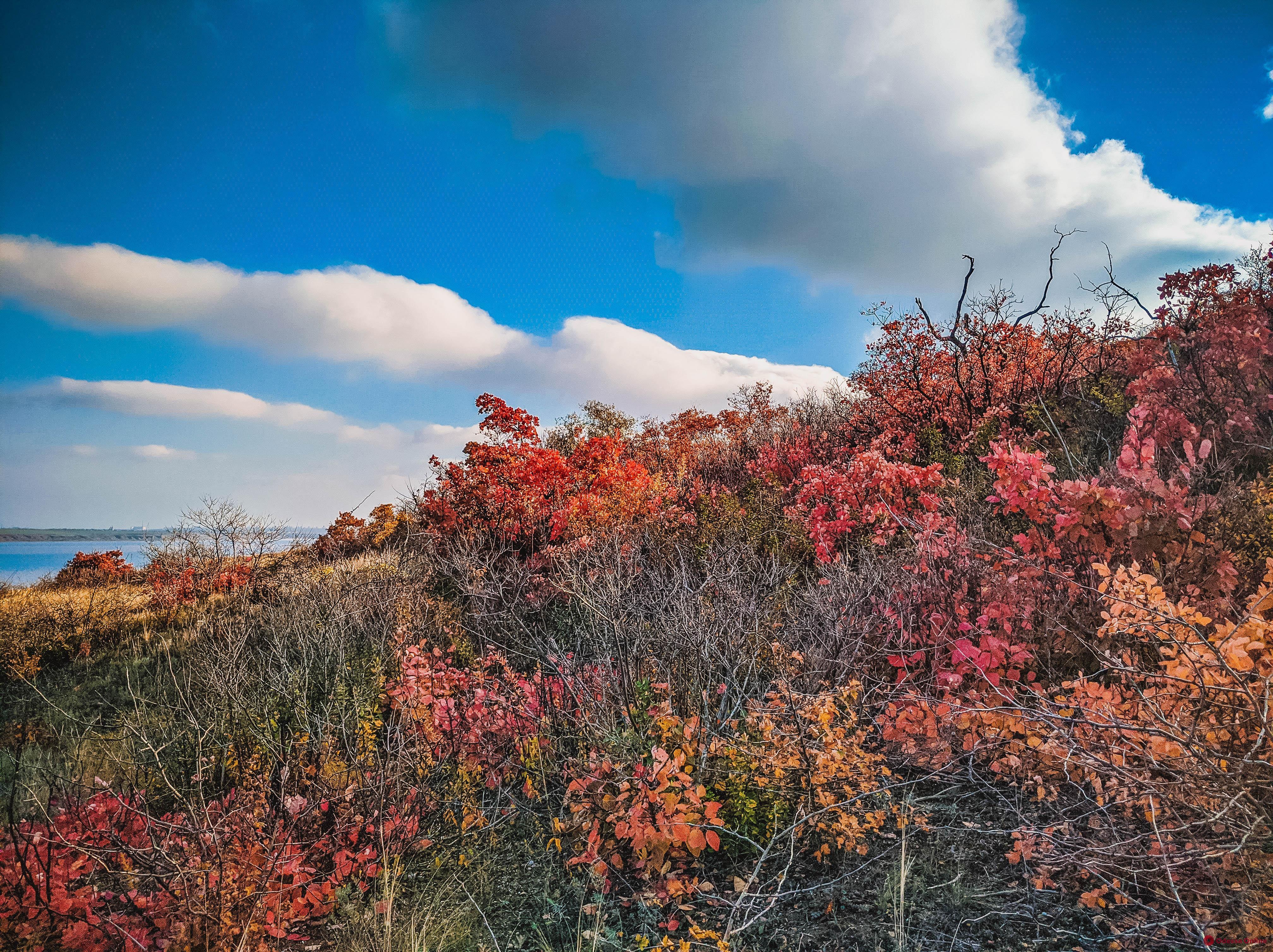 Яркие краски осеннего Куяльника (фоторепортаж)